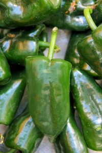 Nature's perfect beauty - the versatile Poblano